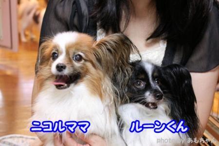 046_20100721046.jpg