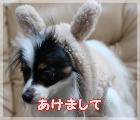IMG_0016_20110101222638.jpg