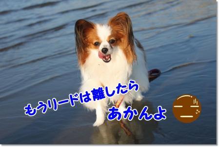 IMG_3028_20100819100845.jpg