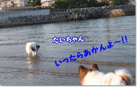 IMG_3121_20100819100921.jpg