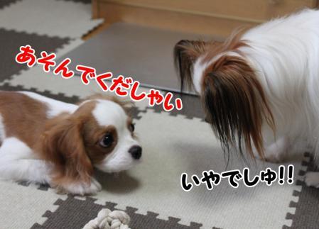 IMG_4352-crop_20100831171017.jpg