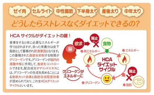 HCAダイエットサイクル