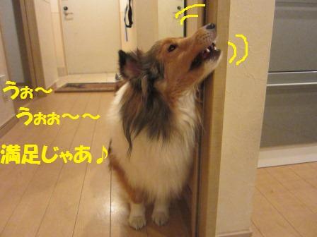 IMG_6341.jpg