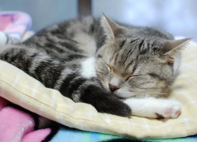 まりんの寝顔
