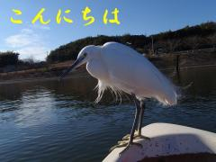 p1230001_20100125224828.jpg