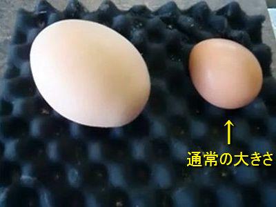 1_20110310213537.jpg