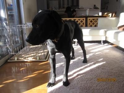 室内犬への道