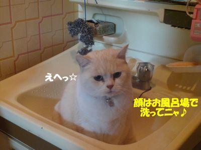 顔はお風呂場で洗ってニャ☆