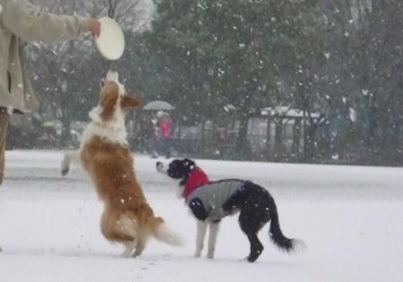 雪ディスク