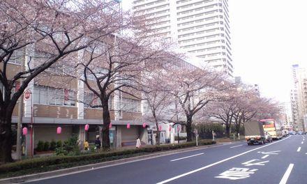 100327_千川通り~01