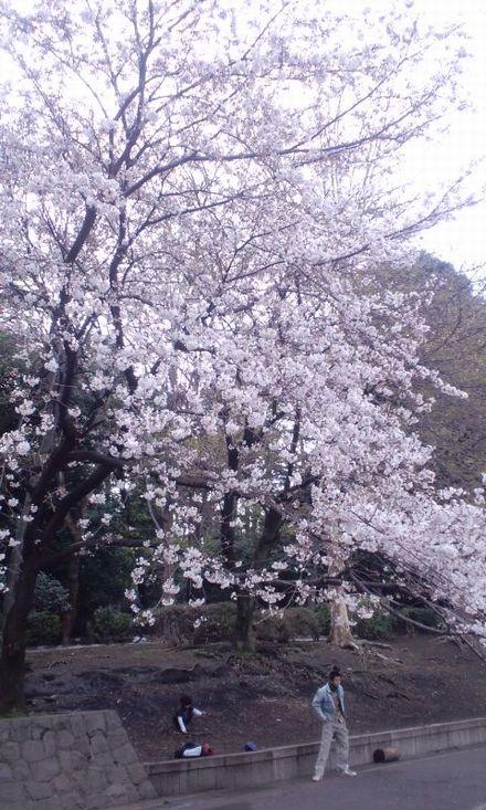 100327_江古田公園~01