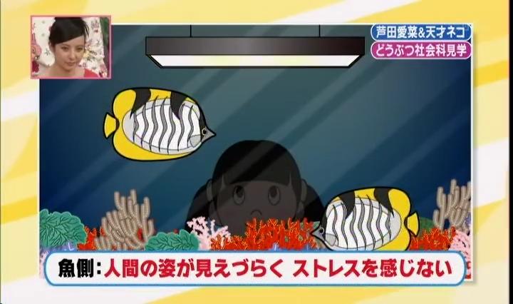 水槽(魚側)