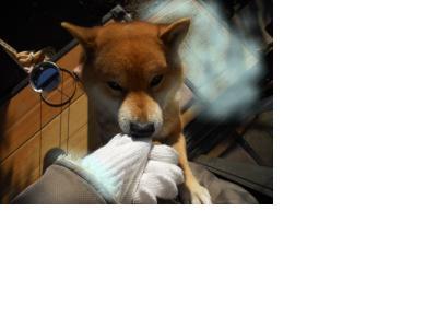 snap_mitubatimiya_20111522057.jpg