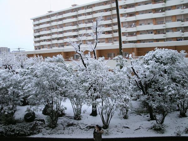 鹿児島の雪