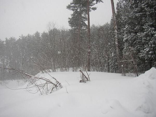 山形山野雪