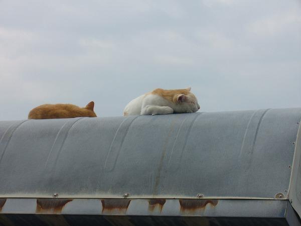猫のんびり