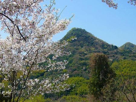 桜と貴峰山