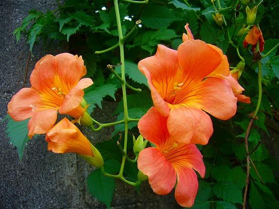 草抜き応援の花