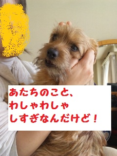 a_20100130230808.jpg