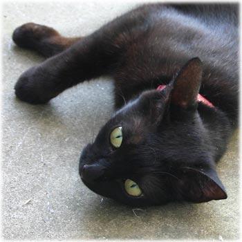 ねこ黒猫2