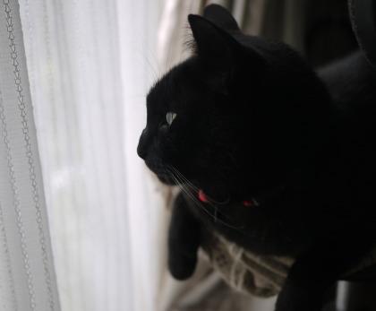ねこ黒猫3