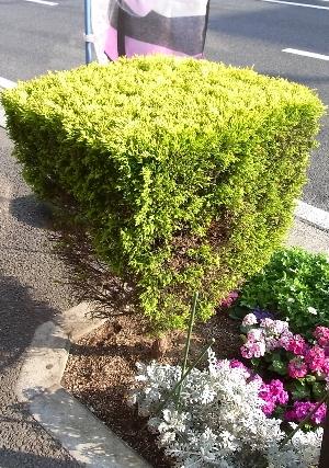 緑の角刈り
