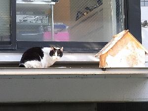 代官山の猫.jpg