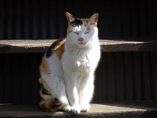 おねむな猫.jpg