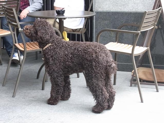 本物の犬.jpg