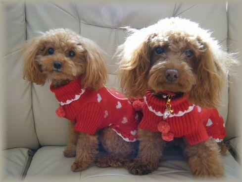 モカ&ココ・苺服