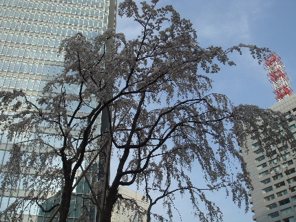 20100320sakura.jpg