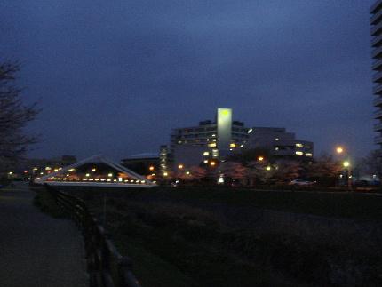20100404sakura4.jpg