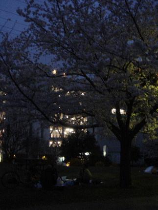 20100404sakura6.jpg