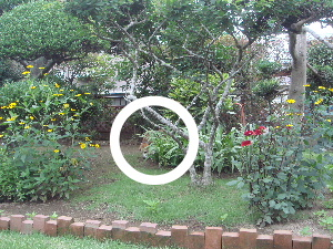 20100716mocha4a.jpg