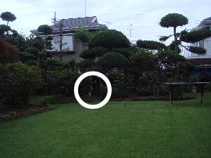 20100716mocha5a.jpg