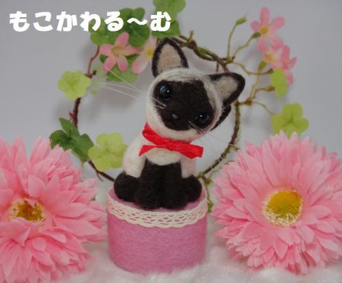 ミニシャム猫1