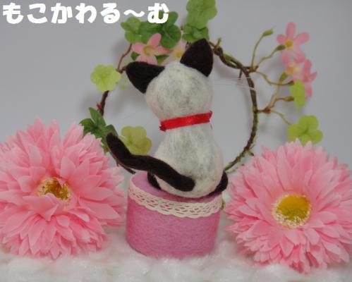 ミニシャム猫3
