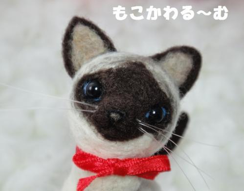 ミニシャム猫4