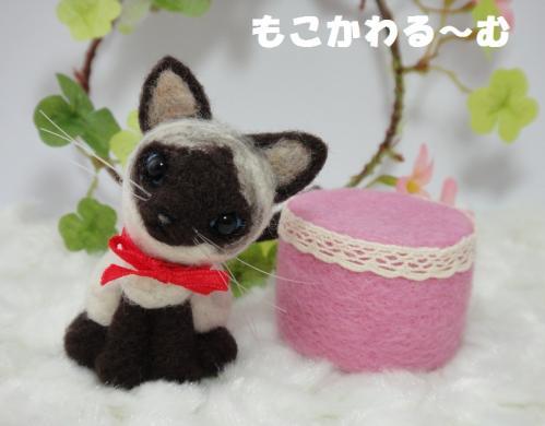 ミニシャム猫5