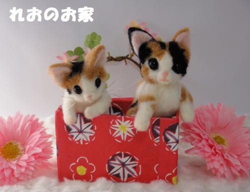 箱三毛猫1