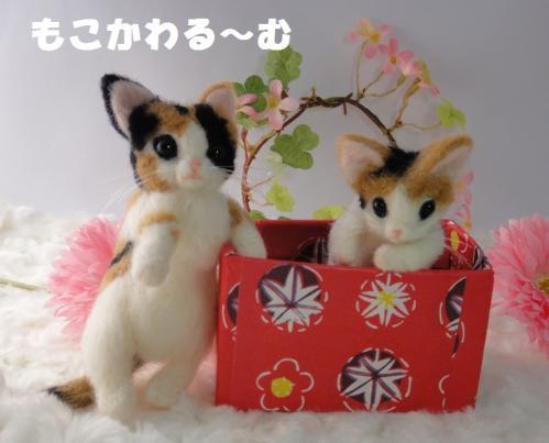 箱三毛猫2