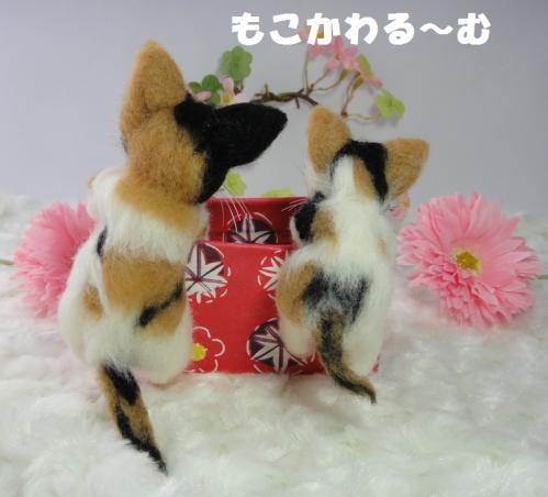 箱三毛猫3