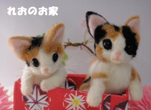 箱三毛猫4