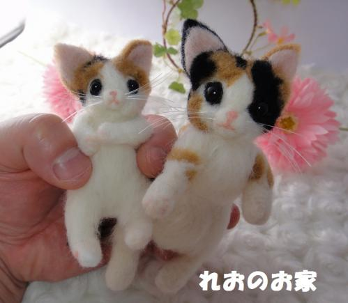 箱三毛猫5