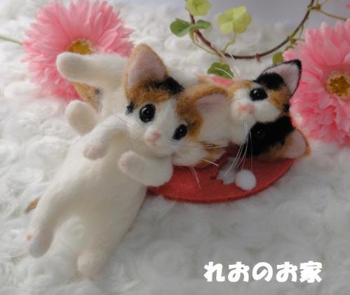 箱三毛猫6