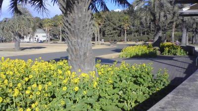 菜の花と7