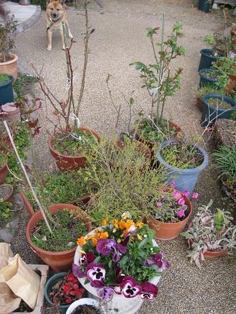 引き取り植物たち201103