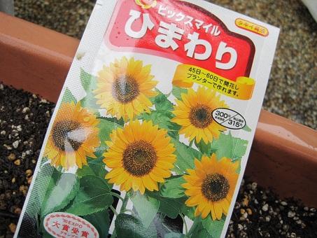 20110501ひまわり1