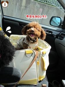 100508有馬富士公園10