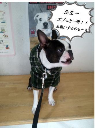 pol繝シhikawa3_convert_20120122043843